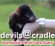 DevilCradle_logo