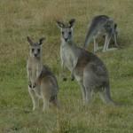 Road trip Sydney Melbourne – Partie 2