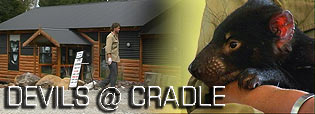 devils_cradle_header