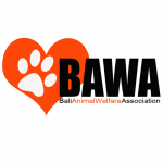BAWA (Bali Animal Welfare Association)