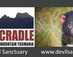 Devils@Cradle – Tasmanie – AUSTRALIE